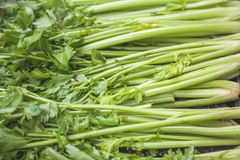 Celery in the market Royalty Free Stock Photo