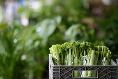Celery at the market Stock Photography