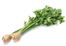 Celery with root Stock Image