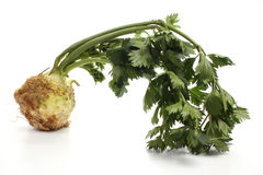 Celery root Royalty Free Stock Images