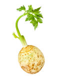 Celery root. On white background Royalty Free Stock Images