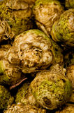 Celery Root. A bunch of celery root for sale at a farmers' market Stock Image