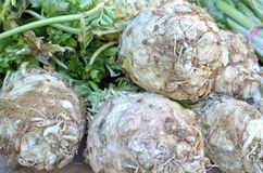 Celery Root. Celeriac, also called turnip-rooted celery or celery root for sale in the market Royalty Free Stock Image