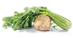 Celery root and green celery Stock Images