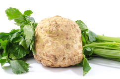 Celery root and green celery. On white Stock Images