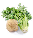 Celery root and green celery. On white Stock Photos