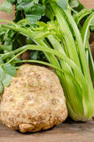 Celery root and green celery. On wooden background Royalty Free Stock Images