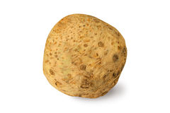 Celery root isolated Royalty Free Stock Photo
