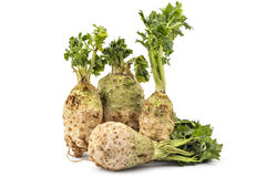 Celery roots. Four fresh organic celery roots with leaves on a white background Royalty Free Stock Images