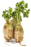 Celery roots. Three fresh organic celery roots with leaves on a white background Stock Images