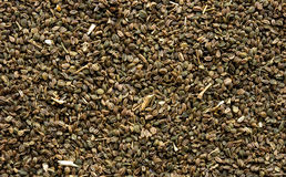 Celery Seeds Background. Showing details and texture Royalty Free Stock Photo