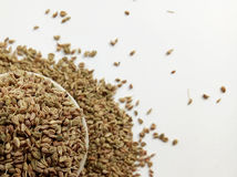 Celery Seeds. Herbal and natural food spice ingredient Stock Image