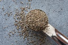 Celery seeds. A teaspoon of celery seeds Royalty Free Stock Image