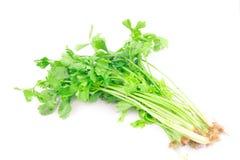 Celery sprig Stock Images