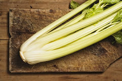 Celery Stalk Stock Photography