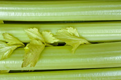 Celery stalks Stock Images