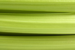 Celery stalks Royalty Free Stock Photo