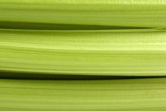 Free Celery Stalks Royalty Free Stock Photo - 17622885