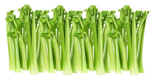 Celery Stalks Stock Photography
