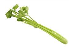 Celery stems Stock Image