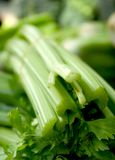 Celery Stems Stock Images