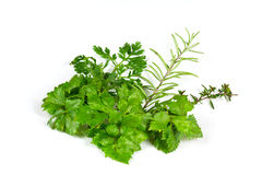 Celery,Thyme and Rosemary  on white background Stock Images