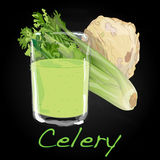 Celery vector illustration Royalty Free Stock Photography
