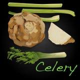 Celery vector illustration Stock Photo