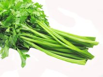Celery vegetable for salad Stock Photography