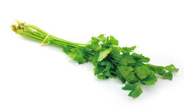 Celery on white background Royalty Free Stock Photo
