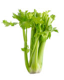 Celery on a white background Royalty Free Stock Images