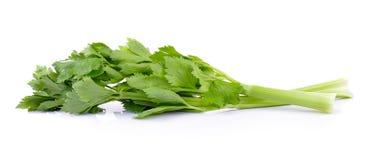 Celery on white background Stock Images