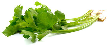 Celery on White Background Royalty Free Stock Images