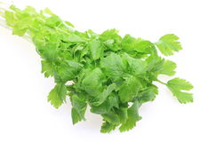 Celery in a white background Stock Image