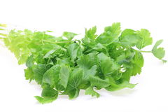 Celery in a white background Royalty Free Stock Images