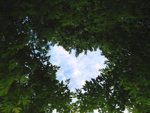 Celestial heart. Heart from green leaves of a tree Stock Images