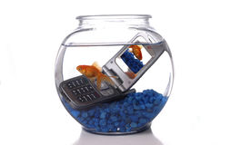 Cell 2. A goldfish in a bowl swims by a cell phone submerged in the water. A picture of the same goldfish is displayed on the screen of the cell phone Stock Photo