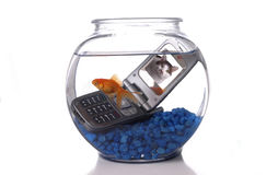 Cell 3. A goldfish in a bowl swims by a cell phone submerged in the water. A picture of a cat is displayed on the screen of the cell phone Stock Image
