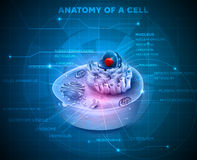 Cell anatomy background Stock Image