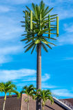 Cell Antenna Disguised. To look like surrounding palm trees Royalty Free Stock Photos