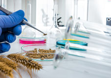 Cell culture assay to test genetically modified Royalty Free Stock Photos