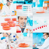 Cell culture work in the lab, collage. Scientists perform cell culture experiments, collage Stock Image