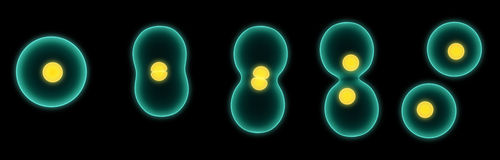 Cell division Royalty Free Stock Image