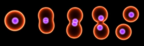 Cell division Royalty Free Stock Photo
