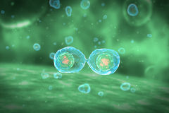 Cell Division Stages of Mitosis Royalty Free Stock Photos