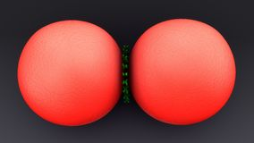 Cell Division. The division of a cell into two daughter cells with the same genetic material Royalty Free Stock Images
