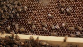Cell Honey bee macro footage of bee hive and honey production beekeeper stock video footage