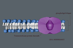 Cell membranece Royalty Free Stock Image