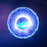 Cell nucleus, ovum, fertilization Royalty Free Stock Photo