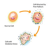 Cell Oxidative Stress. Oxidative stress of a healthy cell caused by an attack of free radicals Stock Photos